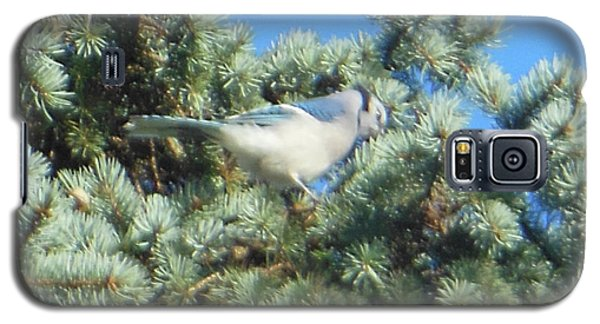 Galaxy S5 Case featuring the photograph Blue Jay Colorado Spruce by Rockin Docks Deluxephotos