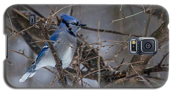 Blue Jay Galaxy S5 Case by Dan Traun