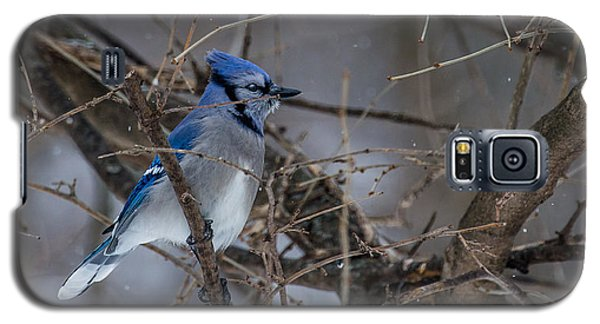 Galaxy S5 Case featuring the photograph Blue Jay by Dan Traun