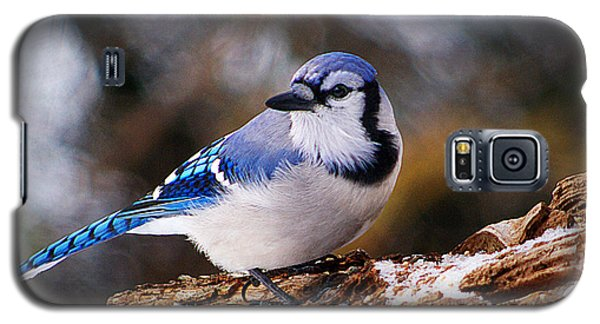 Blue Jay Day Galaxy S5 Case
