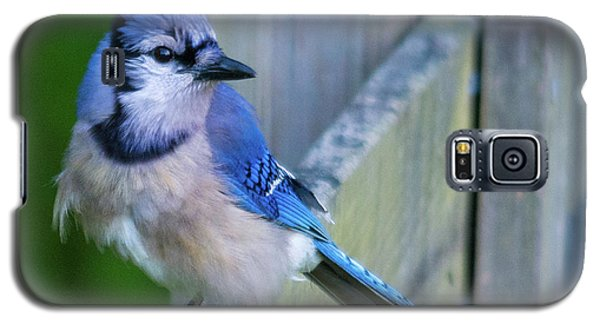 Blue Jay Fluffed Galaxy S5 Case