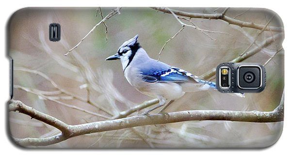 Galaxy S5 Case featuring the photograph Blue Jay by George Randy Bass