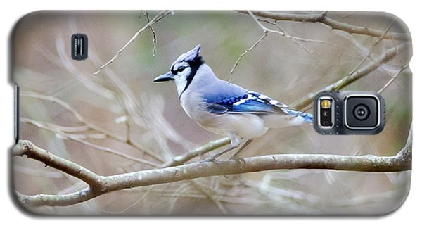 Blue Jay Galaxy S5 Case by George Randy Bass