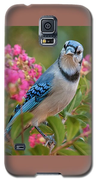 Blue Jay In Crepe Myrtle Galaxy S5 Case by Jim Moore