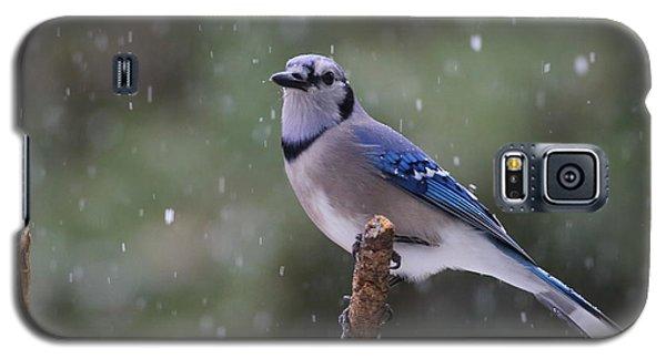 Blue Jay In Falling Snow Galaxy S5 Case