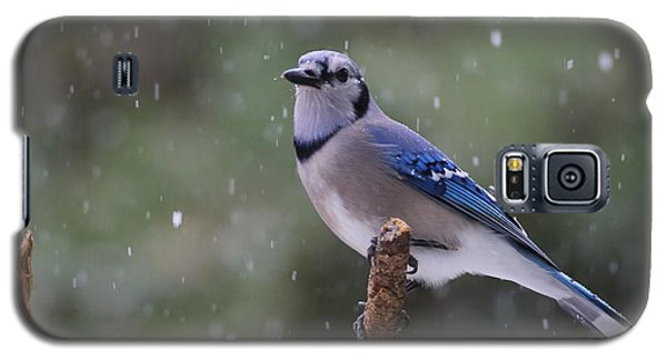 Blue Jay In Falling Snow Galaxy S5 Case