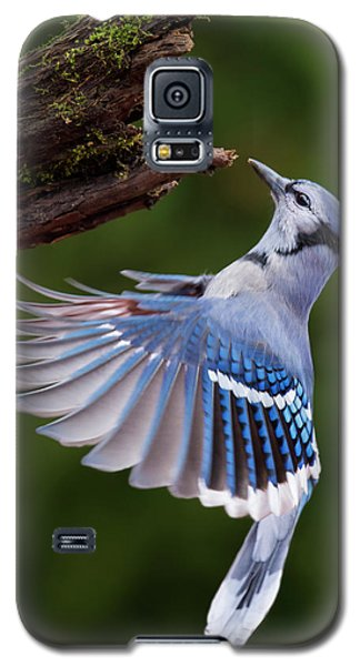 Galaxy S5 Case featuring the photograph Blue Jay In Flight by Mircea Costina Photography