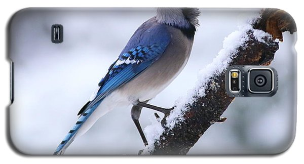 Blue Jay In Snow Galaxy S5 Case