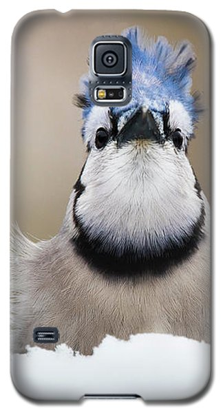 Blue Jay In Snow Galaxy S5 Case