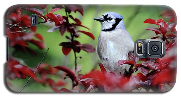Blue Jay In The Plum Tree Galaxy S5 Case