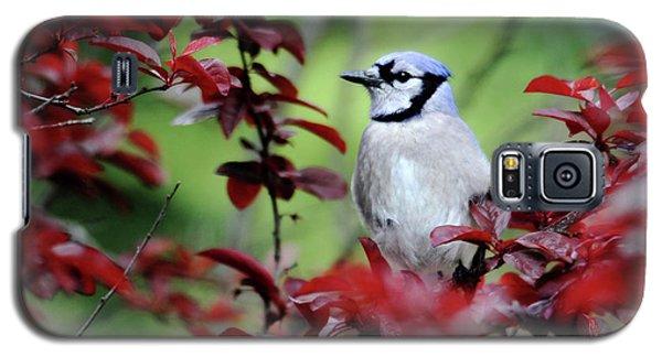 Blue Jay In The Plum Tree Galaxy S5 Case