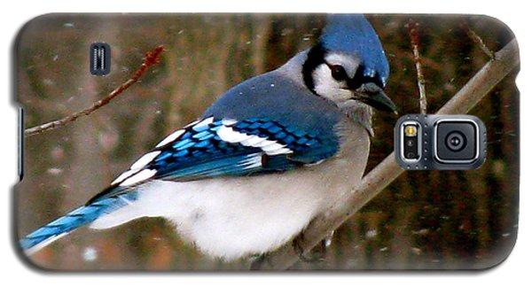 Blue Jay In The Snow Galaxy S5 Case by Debra     Vatalaro