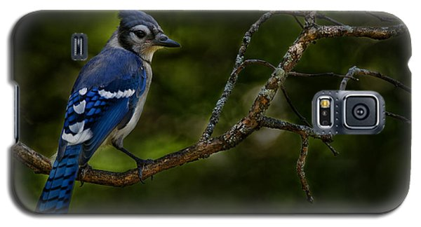 Galaxy S5 Case featuring the photograph Blue Jay In Tree by Michael Cummings