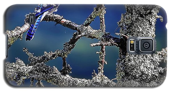 Blue Jay Mountain Galaxy S5 Case
