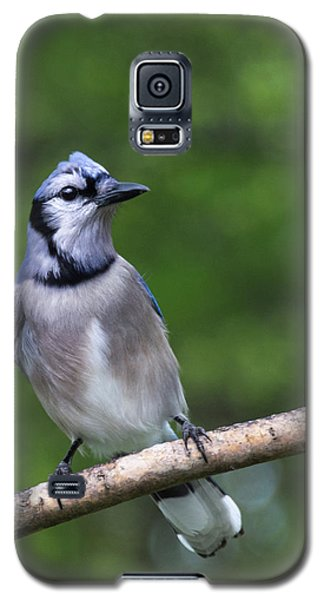 Blue Jay On Alert Galaxy S5 Case