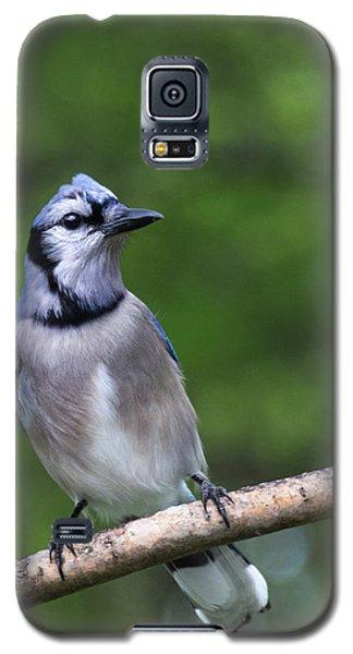 Blue Jay On Alert Galaxy S5 Case