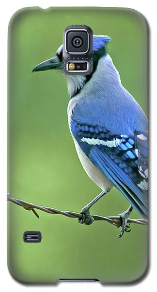 Bluejay Galaxy S5 Case - Blue Jay On The Fence by Robert Frederick