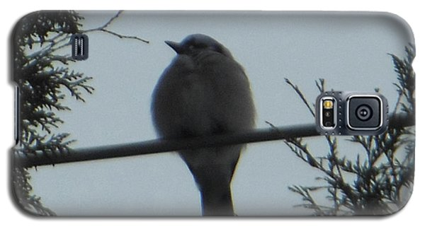 Blue Jay On Wire Galaxy S5 Case