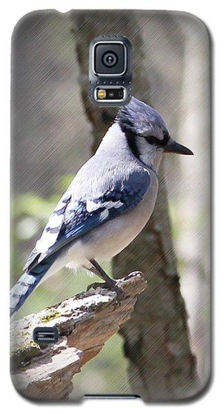 Blue Jay Perch Galaxy S5 Case by Anita Oakley