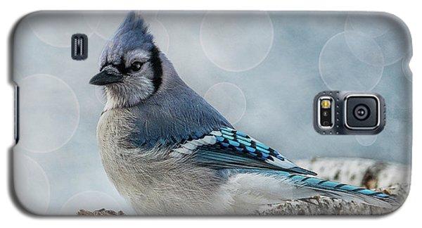 Blue Jay Perch Galaxy S5 Case