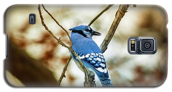 Bluejay Galaxy S5 Case - Blue Jay by Robert Frederick