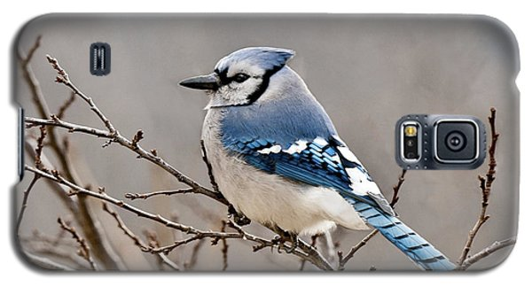 Blue Jay Way Galaxy S5 Case