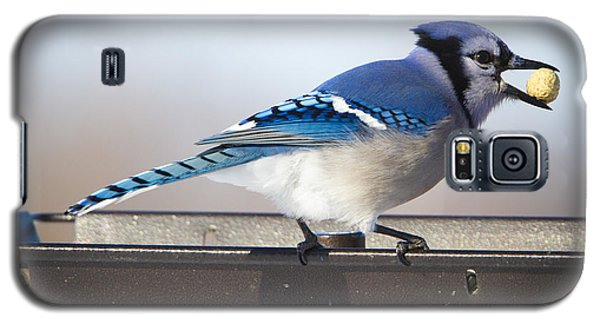 Blue Jay With A Mouth Full Galaxy S5 Case by Ricky L Jones