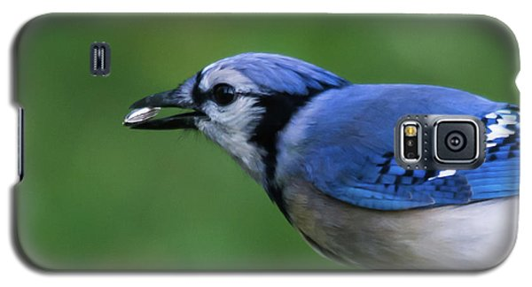 Blue Jay With Seed Galaxy S5 Case