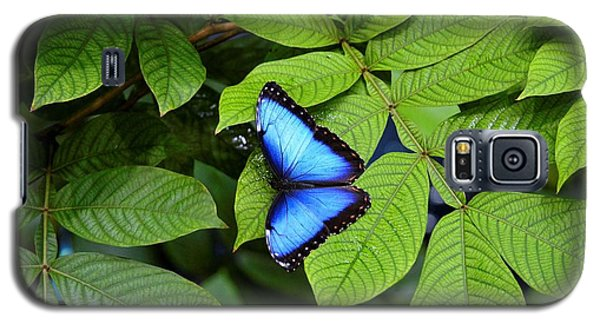 Blue Leaves - Morpho Butterfly Galaxy S5 Case