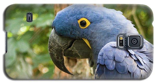 Blue Macaw Galaxy S5 Case