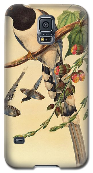 Blue Magpie, Urocissa Magnirostris Galaxy S5 Case