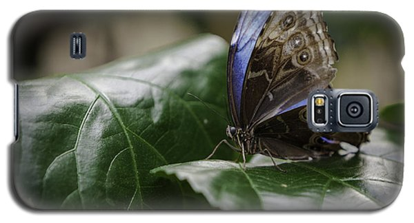 Galaxy S5 Case featuring the photograph Blue Morpho On A Leaf by Jason Moynihan
