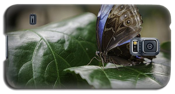 Blue Morpho On A Leaf Galaxy S5 Case