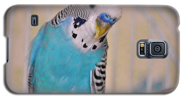 Blue Parakeet Galaxy S5 Case