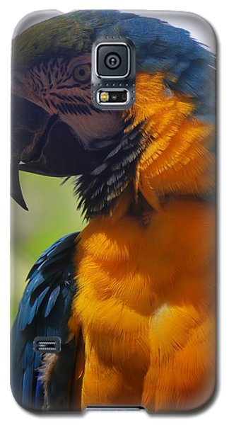 Blue Parrot Galaxy S5 Case