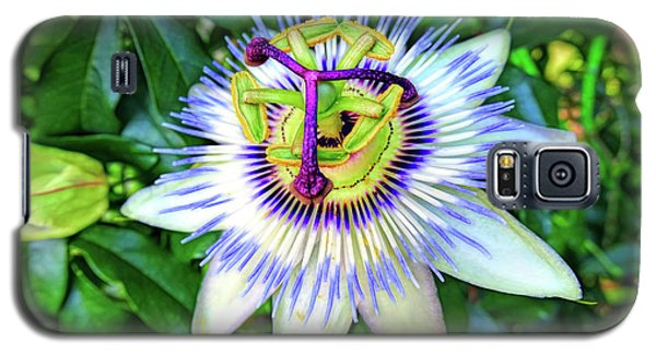 Blue Passion Flower Galaxy S5 Case