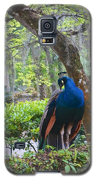 Blue Peacock  Galaxy S5 Case