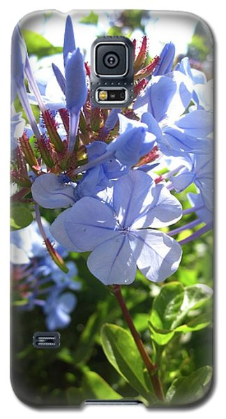 Galaxy S5 Case featuring the photograph Blue Plumbago by Mary Ellen Frazee