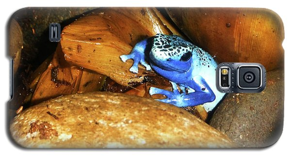 Galaxy S5 Case featuring the photograph Blue Poison Dart Frog by Anthony Jones