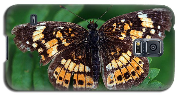 Galaxy S5 Case featuring the photograph Blue Ridge Butterfly by Kay Lovingood