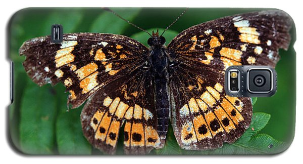 Blue Ridge Butterfly Galaxy S5 Case
