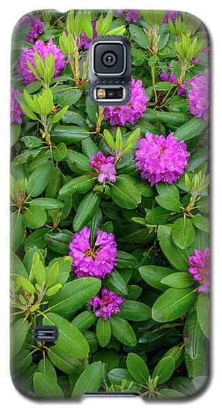 Blue Ridge Mountains Rhododendron Blooming Galaxy S5 Case