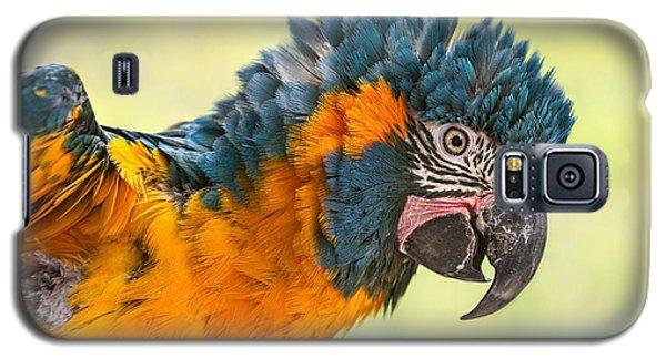 Blue Throated Macaw Galaxy S5 Case