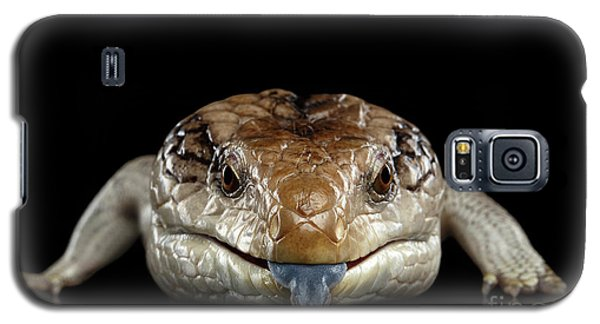 Blue-tongued Skink Galaxy S5 Case
