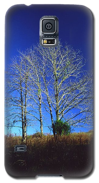 Blue Tree In Tennessee Galaxy S5 Case