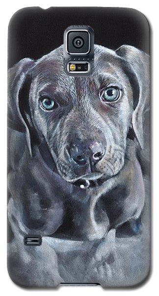 Blue Weimaraner Galaxy S5 Case