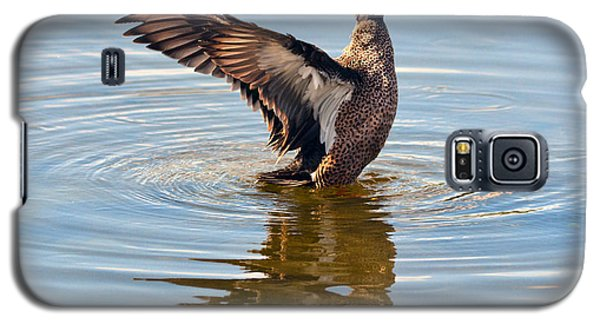 Blue Winged Teal 3 Galaxy S5 Case