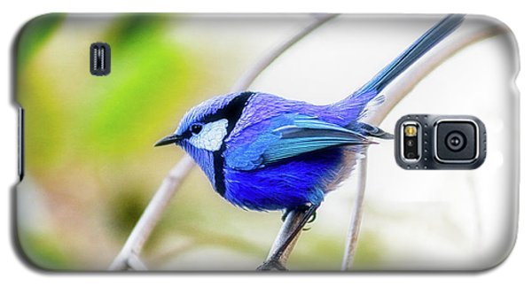 Galaxy S5 Case featuring the photograph Blue Wren, Margaret River by Dave Catley