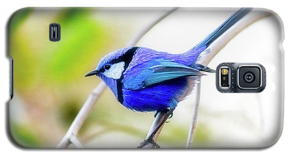 Blue Wren, Margaret River Galaxy S5 Case by Dave Catley