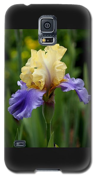 Blue Yellow Iris Germanica Galaxy S5 Case